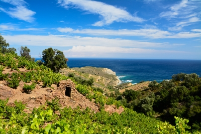Vigne-mer-Vin-Banyuls-Collioure.redjpg